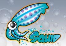 panduan praktis squid